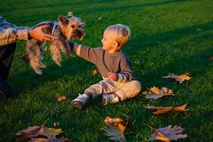 Small baby toddler on sunny autumn day walk with dog. Warmth and coziness. Happy childhood. Sweet childhood memories. Child play with yorkshire terrier dog royalty free stock images