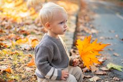 Small baby toddler on sunny autumn day. Warmth and coziness. Happy childhood. Sweet childhood memories. Child autumn. Leaves background. Warm moments of autumn royalty free stock photo