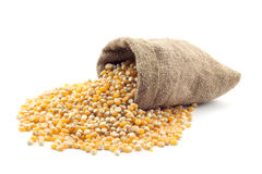 Small bag of corn Royalty Free Stock Photo