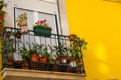 Small balcony with flower pots against bright yellow wall. Traditional portuguese outdoor design. Street decoration in Lisbon. Decorated patio in Europe royalty free stock photography