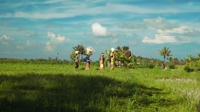 Small balinese family procession between rice fields stock video footage