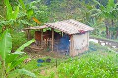 Small balinese farm Stock Photography