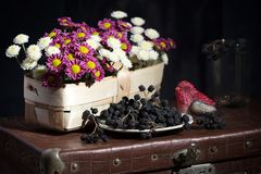 A small basket with flowers on an old suitcase. With toy and dried currant Royalty Free Stock Photo