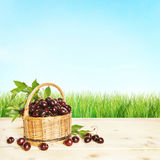 Small basket full of cherry berries Royalty Free Stock Image