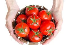 Small basket full of red tomatoes in hands of young woman. Isolated on the white background Royalty Free Stock Photo