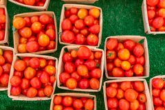 Cherry Tomatoes for Sale at a Local Farmers Market royalty free stock photography