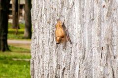 Small bat on tree moving downward Stock Photos