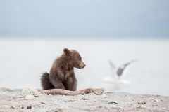Small bear cub and seagull Royalty Free Stock Photo