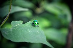 Dashing insect with cool attitude stock photo