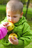 The small beautiful boy walks on a green glade with an apple Stock Photo