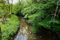 Small beautiful brook stream in a forest Royalty Free Stock Photo
