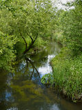 Small beautiful brook stream in a forest Stock Images