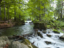 Small beautiful brook stream waterfall in a forest Royalty Free Stock Photography