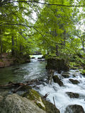Small beautiful brook stream waterfall in a forest Stock Photography