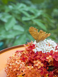 Small beautiful butterfly in Beautiful Indonesia Miniature Park. It is a close up shot of a small beautiful butterfly in Beautiful Indonesia Miniature Park Royalty Free Stock Images