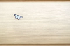 Small beautiful butterfly sits on wall covered with beige siding panels front view Stock Photo