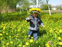 Beautiful child with dandelions in the spring Royalty Free Stock Image