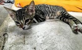 A small beautiful feral cat lying down on the pavement of a hostel floor looking a bit sad, in Flores, Guatemala. He has beautiful spotted and striped patterns stock images