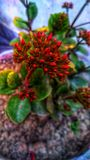 Red colour small buds of a plant royalty free stock photography