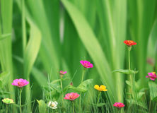 Small beautiful flowers in the garden Stock Photography