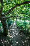 Small beautiful path in shade under beautiful old oak tree Royalty Free Stock Images