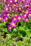 Small beautiful pink flowers Stock Photography