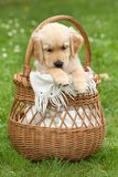 Small beautiful puppy royalty free stock photography