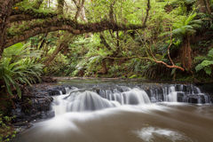Small but beautiful rapid on Purakaunui River, New Zealand Royalty Free Stock Images
