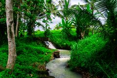 A small, beautiful River in the Jungle stock photos
