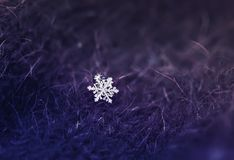 Small beautiful shiny snowflake dropped on a warm lilac knitted stock image