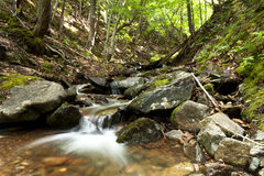 Small beautiful waterfall in a forest Royalty Free Stock Photography