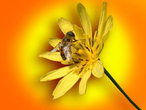 Small bee on yellow flower. On colorful background stock photography