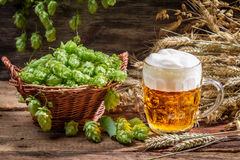 Small beer with a large foam Stock Image