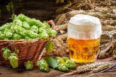 Small beer with a large foam surrounded by hops Stock Photos