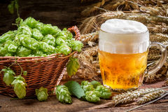 Small beer with a large foam surrounded by hops Stock Photography