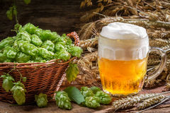 Small beer with a large foam surrounded by hops Stock Image