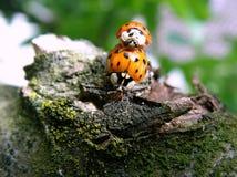 Small beetle stock photos