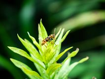 Small beetle on green leaves stock image