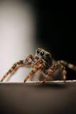 Small beetle macro little bug Royalty Free Stock Photo