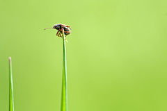 A small beetle on the top Stock Image