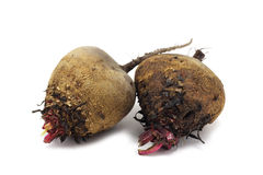 Small beets Royalty Free Stock Images