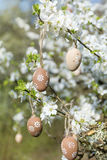 Small beige  easter eggs hanging on the branches of a blooming cherry tree Stock Photos