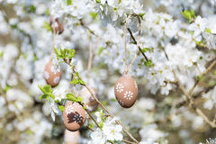 Small beige  easter eggs hanging on the branches of a blooming cherry tree Stock Photo