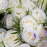 Small beige roses Stock Images
