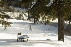 Small bench covered in snow under a tree Stock Photography