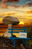 Small bench with wet paint at sunset. Small bench with wet paint and giant mushroom at sunset Stock Photography