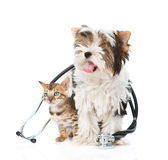 Small bengal cat and Biewer-Yorkshire terrier puppy with stethoscope. isolated on white.  stock image