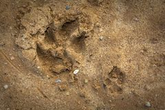 Small and big dogs feet prints on a wet sand. Abstract background Royalty Free Stock Photos