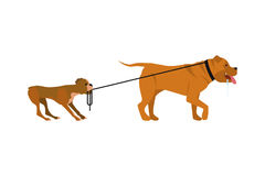 Small and big dogs. Vector illustration in flat cartoon style the small dog pulls for a leash big. Isolated on white background royalty free illustration