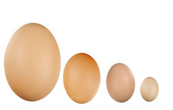Small and big eggs Royalty Free Stock Photography